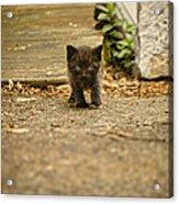 Miniature Stalker Acrylic Print