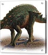 Minmi Paravertebra, A Prehistoric Era Acrylic Print