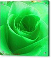 Mint Rose Acrylic Print