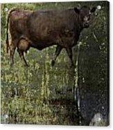 Mirrored Moos  Acrylic Print
