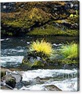 Misery Creek Acrylic Print