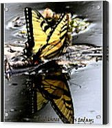 Missing You - Butterfly Acrylic Print