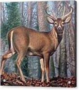 Missouri Whitetail Deer Acrylic Print
