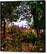 Mist Beyond The Apple Trees Acrylic Print