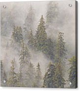 Mist In Tongass National Forest Acrylic Print