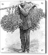 Mistletoe Gatherer, 1894 Acrylic Print