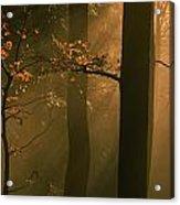 Misty Autumn Forest At Sunset Acrylic Print