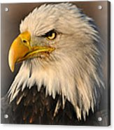 Misty Eagle Acrylic Print