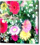 Mixed Asters Acrylic Print