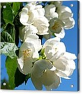 Mock Orange 4 Acrylic Print