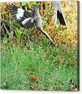 Mockingbird Fight Club Acrylic Print