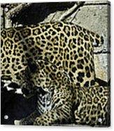 Mom And Baby Cheetah Acrylic Print