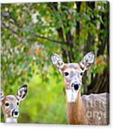 Mom And Baby Deer Acrylic Print