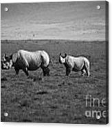 Mom And Child Black Rhinos Acrylic Print