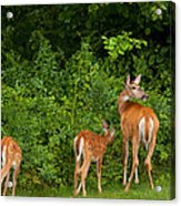 Mom And Two Acrylic Print