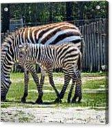 Mom N Baby Stripes Acrylic Print