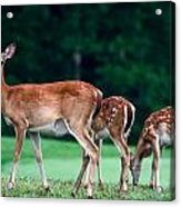 Mom With Twins Acrylic Print