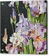 Mom's Night Iris Acrylic Print