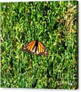 Monarch Butterfly Photograph Acrylic Print