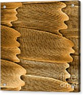 Monarch Butterfly Scales, Sem Acrylic Print