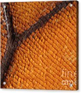 Monarch Butterfly Wing Scales Acrylic Print