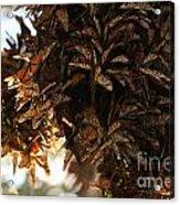 Monarch Jumble Acrylic Print