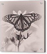Monarch On Sunflower Acrylic Print
