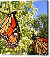 Monarch Rest I Acrylic Print