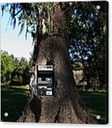 Money Tree . 7d9817 Acrylic Print