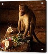Monkey And Coconut Acrylic Print