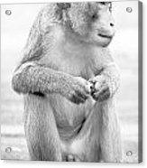 Monkey Dick Acrylic Print