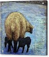 Monkton Ewe With Her Lambs In The Snowy Field Acrylic Print
