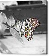 Monochromatic Butterfly Acrylic Print