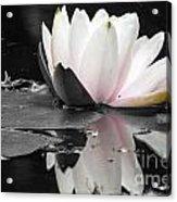 Monochrome Lily Acrylic Print