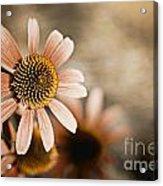Monotone Flower Acrylic Print