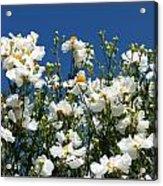 Monterey Beauty Acrylic Print
