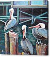 Monterey Pelicans Acrylic Print