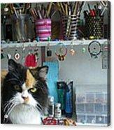 Moo Shu Cat On My Desk Acrylic Print by Kristi L Randall