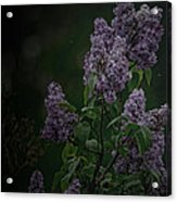 Mood Lilac Acrylic Print