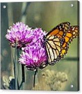 Moody Monarch Acrylic Print