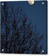 Moon And Trees Acrylic Print