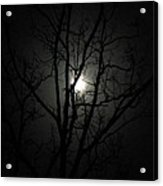 Moon Branches Acrylic Print by Jennifer Compton