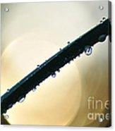 Moon Drops Acrylic Print by Kaye Menner
