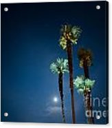 Moon Light And Palm Trees Acrylic Print