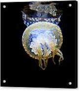 Moon Lit Jelly Acrylic Print