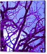 Moon Tree Purple Acrylic Print by First Star Art