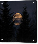 Moonset In The Spruce Bog Acrylic Print