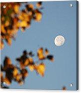 Moonset Morning Acrylic Print