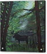 Moose In Pines Acrylic Print