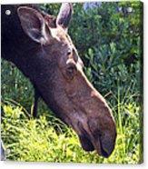 Moose Profile Acrylic Print